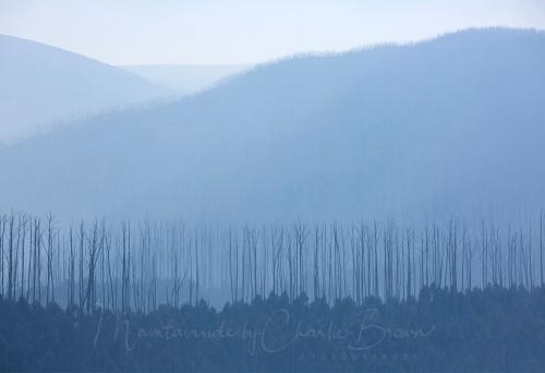 Smokey Falls Trees