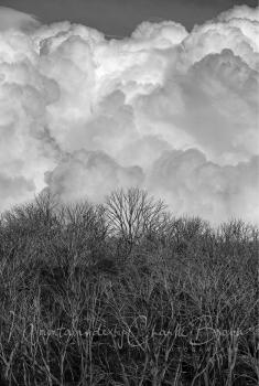 Tawonga Storm